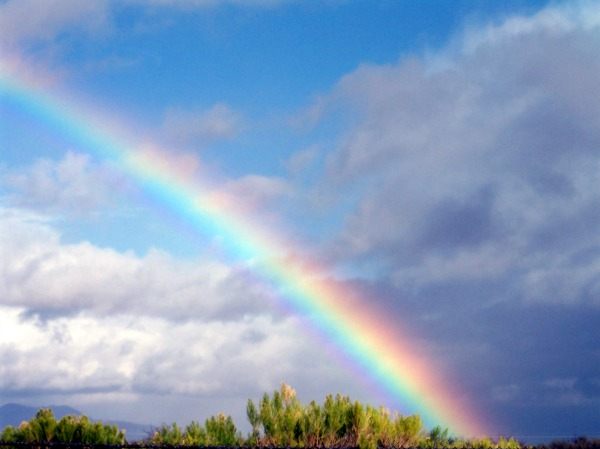 A Note to Chief Diversity Officers: Be A Rainbow in the ...